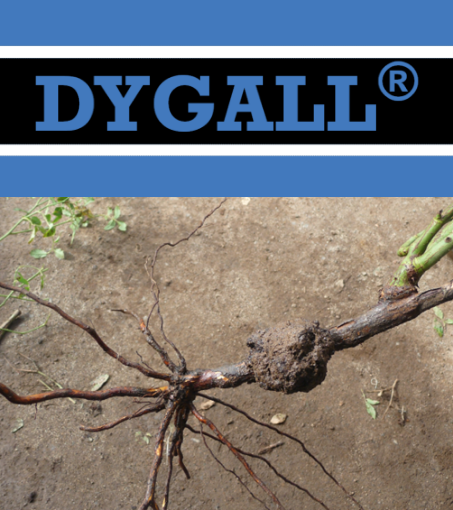 Dygall Photo